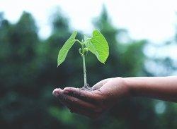 Umas mãos segurando uma planta verde